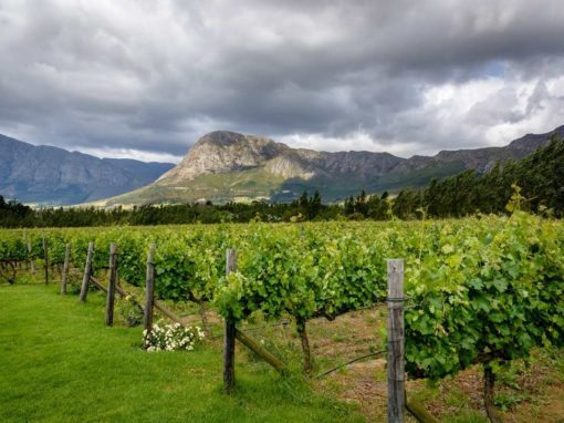 Full Day Cape Point & Winelands