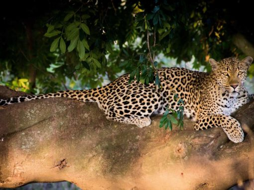 When to Travel to The Kruger Park ?