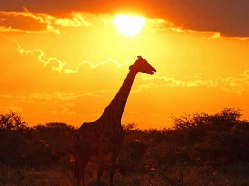 Best of Kruger Safari 8 Night Luxury Safari