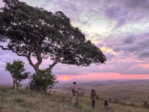 Kleins Camp – Serengeti – Tanzania (Luxury)