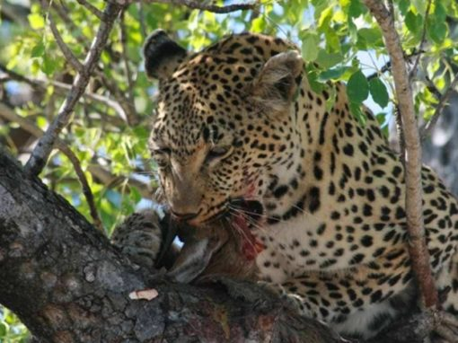 5 Day Kruger National Park & Sabi Sands Safari