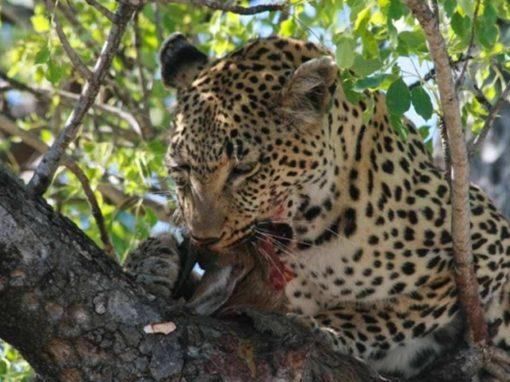 5 Day Kruger National Park & Sabi Sands Safari