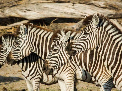 6 Day Kruger National Park  & Sabi Sands Safari