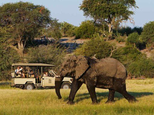 Leroo La Tau – Makgadikgadi Pans National Park