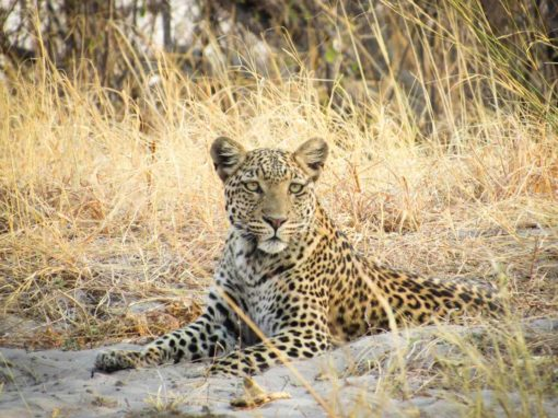 Sabi Sands Selati Camp – 3 Night fly in Special Offer