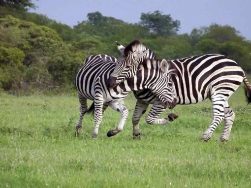 10 Day Cape Town & Safari Honeymoon