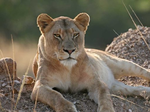 Cape, Kruger & Spa Luxury 14 Day Tour