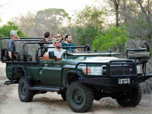 Why Visit the Kruger National Park