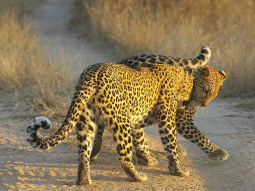 4 Day Kruger National  Park  & Sabi Sands Safari