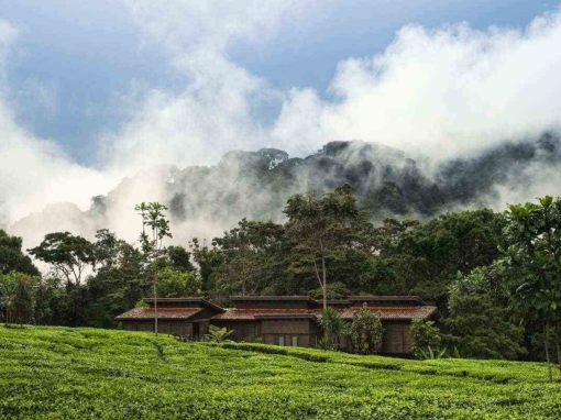 One & Only Nyungwe Forest House