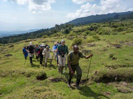 7 Day Gorilla Trekking & Nyungwe Forest Adventure – Rwanda