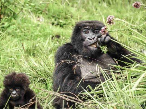 4 Day Rwanda Gorilla Trekking Adventure
