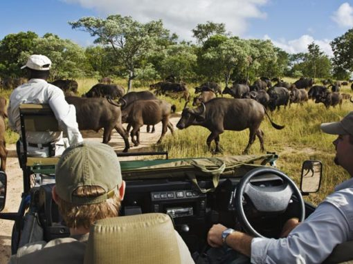Best of The Kruger National Park