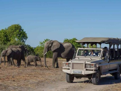 5 Day Victoria Falls & Chobe Fly-in Packages