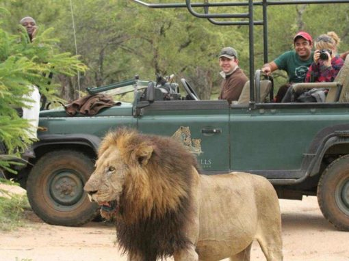 9 Night Kruger to Cape Luxury Escape
