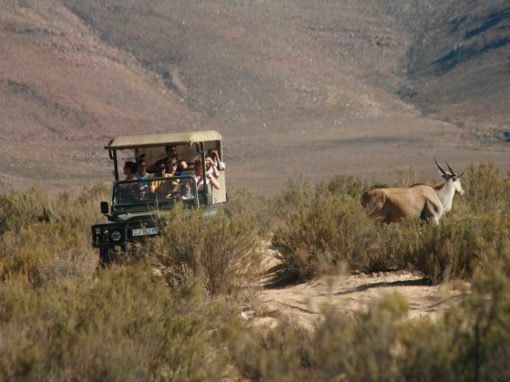 Full Day Combo Safari Tour