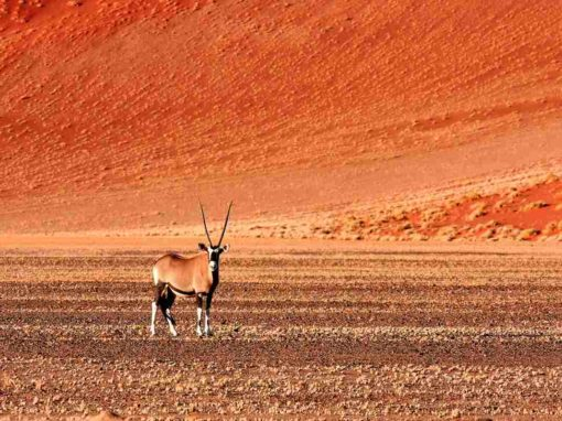 7 Day Namibia Northern Odyssey