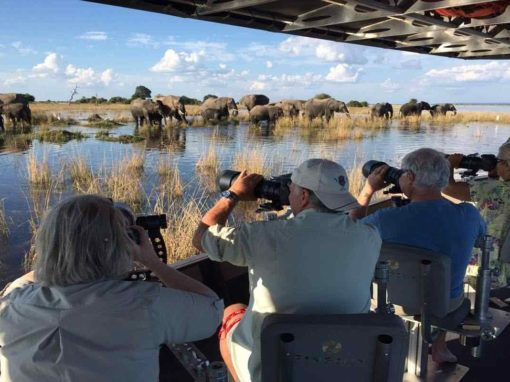 Best of Chobe Photo Safari