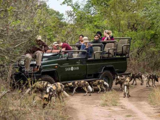 Luxury 3 Night Fly in Safari at Sabi Sands Little Bush