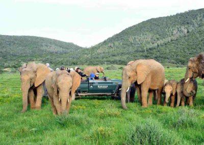Kariega Game Reserve – Eastern Cape