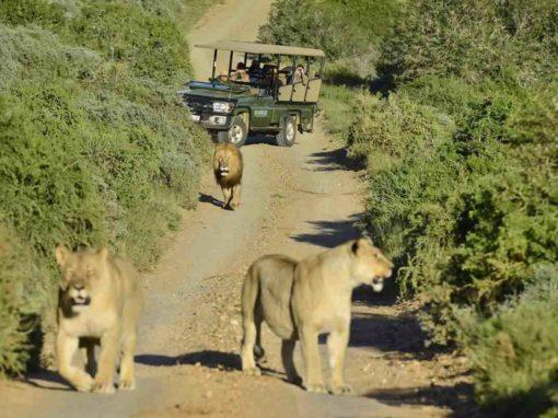8 Day Cape Town & Shamwari Private Game Reserve