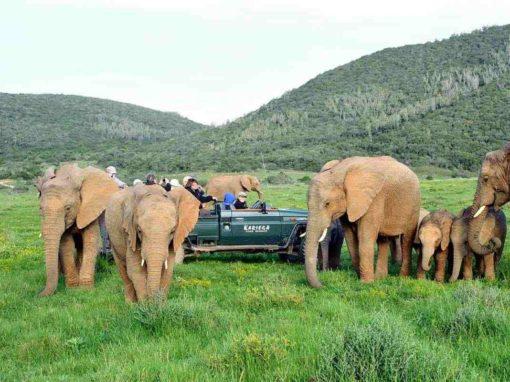 13 Day Cape Town, Garden Route & Eastern Cape Safari