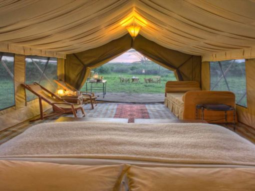 Serengeti Under Canvas – Tanzania