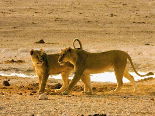 8 Day Namibia,  Etosha National Park & Zambezi