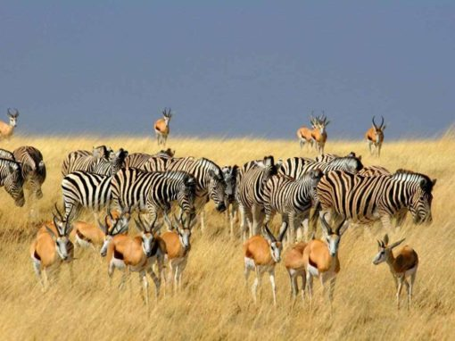 7 Day Namibia Highlights Fly-in Safari