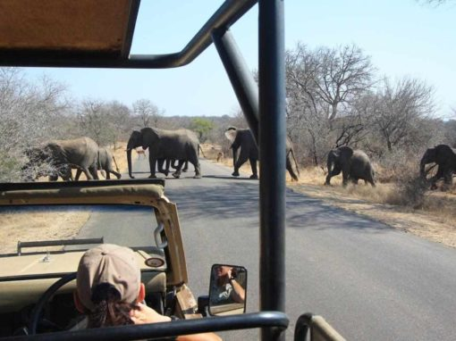 Captivating Kruger National Park – 3 Nights