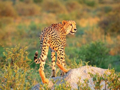 6 Night Best of Madikwe & Timbavati Safari