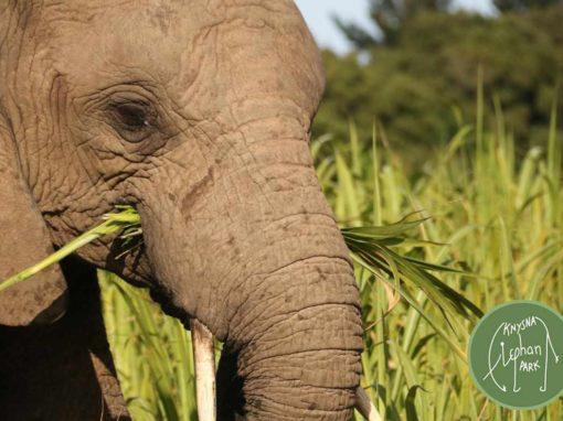Knysna Elephant Park – Knysna